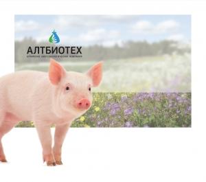 Энзимспорин для свиней и поросят