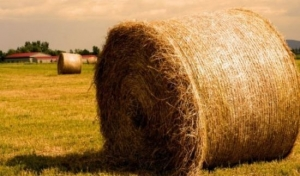 Биоконсервант для силоса и сенажа «Фермасил»